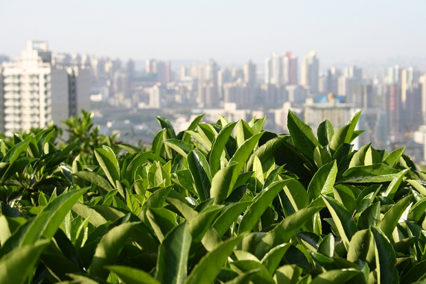 china_2007_029