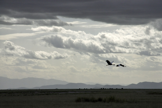 kenya_web_2012_013