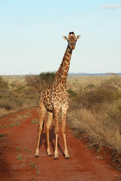 kenya_web_2012_020