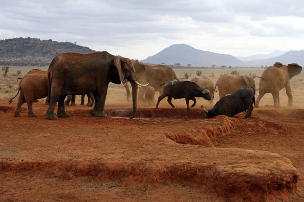 kenya_web_2012_031