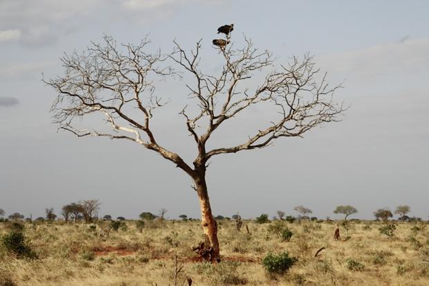 kenya_web_2012_035
