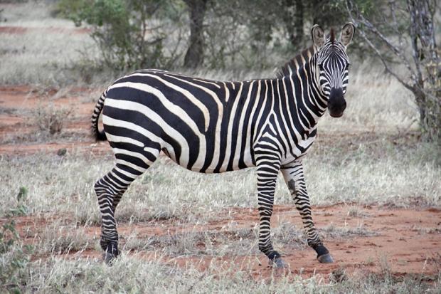 kenya_web_2012_036