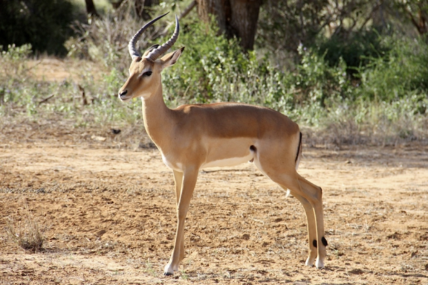 kenya_web_2012_038