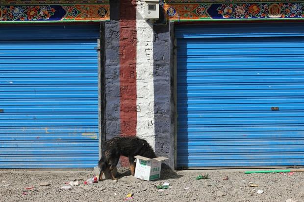 tibet_2013_036